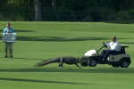A Golf Tourney Just Isn't Complete Without an Alligator on the Course