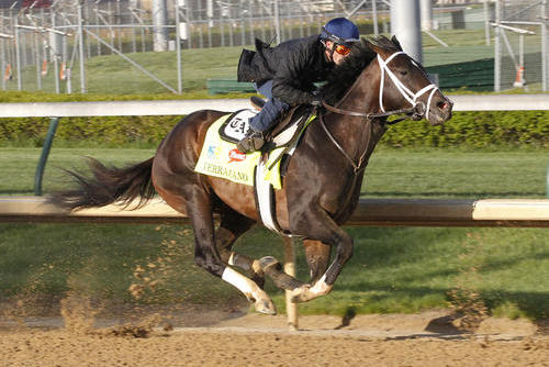 2013 Kentucky Derby Odds: Vegas Lines for Thrilling Race at Churchill Downs