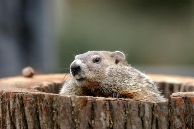 Grumpy Groundhog Runs Amok at New Jersey Little League