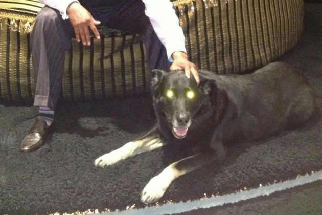 Call Off the Search, Because Deion Sanders Found His $15K German Shepherd Dog