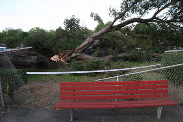 Two Hurt as Oak Tree Crashes Down on 49ers Coaching Outing
