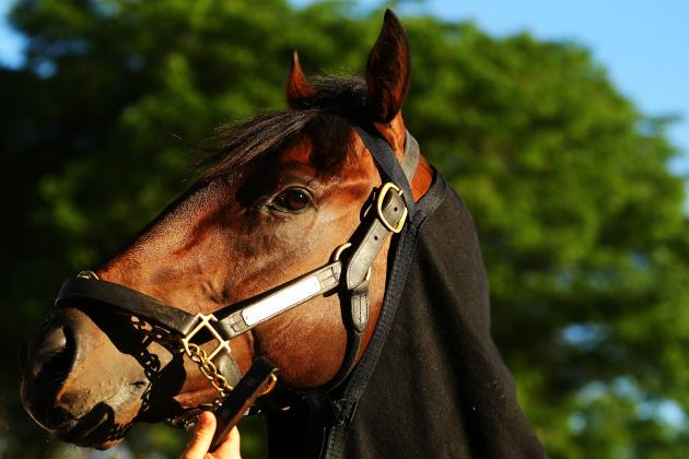 Belmont Stakes 2013: Orb Will Be Dominant at Elmont