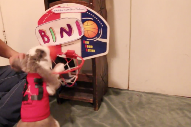 Watch This Rabbit Dunk A Basketball
