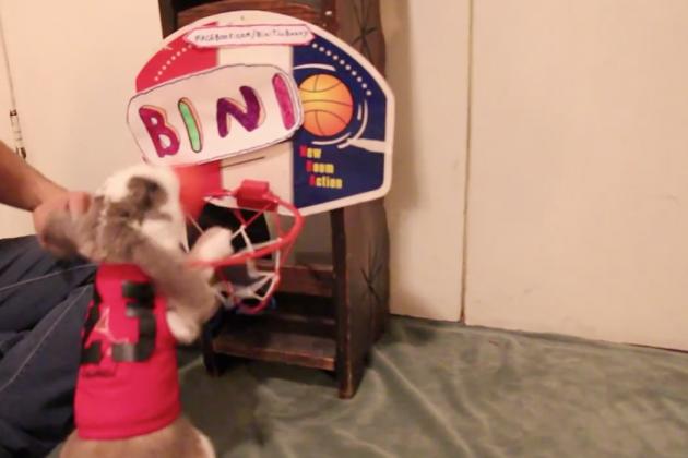 Watch This Rabbit Dunk A Basketball
