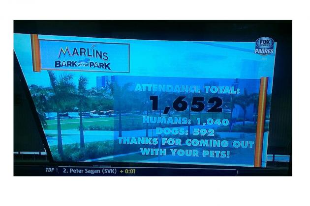Dogs Made Up a Considerable Percentage of the Fans at Marlins Park