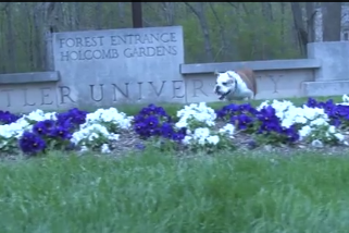 Butler Blue III, Aka Trip, Training for the Move to the Big East (VIDEO)