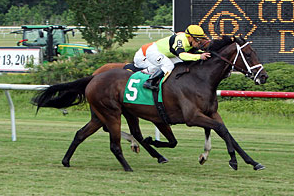 Hudson Steele Could Shine in Oceanport Stakes