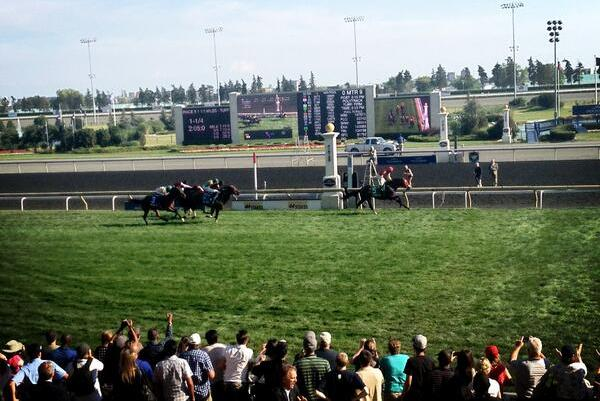Breeders' Stakes 2013 Results: Winner, Purse and Top Finishers