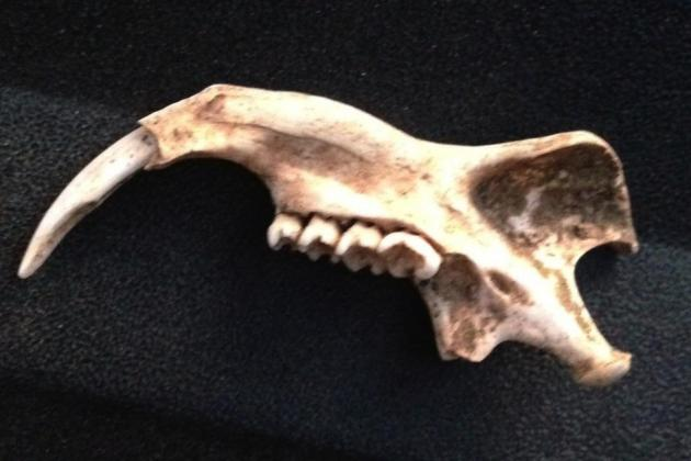 San Jose Sharks Player Would Like Some Help Identifying His Terrifying Fossil