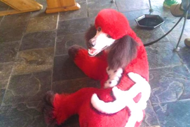 Alabama Crimson Tide Fans Decorate Their Poodle in Insane Fashion