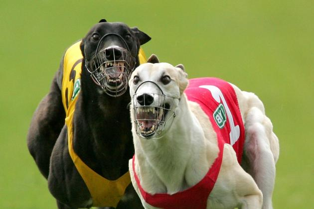 Irish Greyhound Derby 2013: Preview and Betting Odds for Saturday's Final