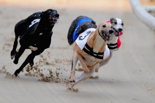 Irish Greyhound Derby 2013 Betting: Slippery Robert the Shelbourne Value