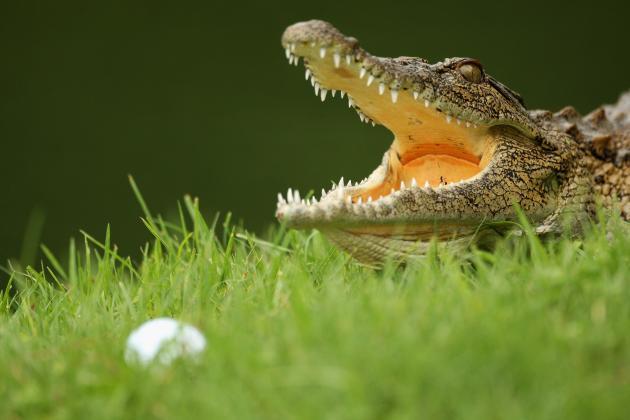 Golfer Sues Resort After Crocodile Bites Off Fingers; 'Chicken' Defense Employed