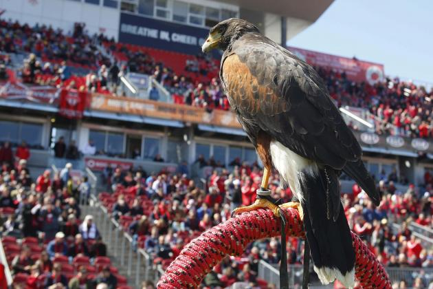 Meet 'Bitchy the Hawk,' Toronto FC Mascot Who Scares off Seagulls
