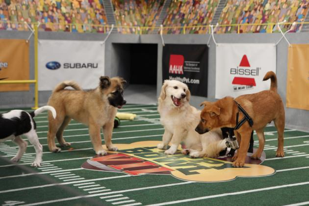 Puppy Bowl X 2014: Starting Lineup, TV Schedule, Photos and More
