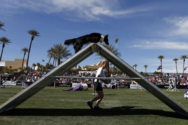 Purina Incredible Dog Challenge Finals 2014: TV Schedule, Events and Results