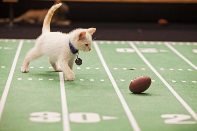 Kitten Bowl 2014: Recap, MVP and Twitter Reaction