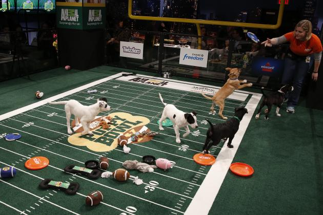 Puppy Bowl X 2014: Recap, MVP and Twitter Reaction