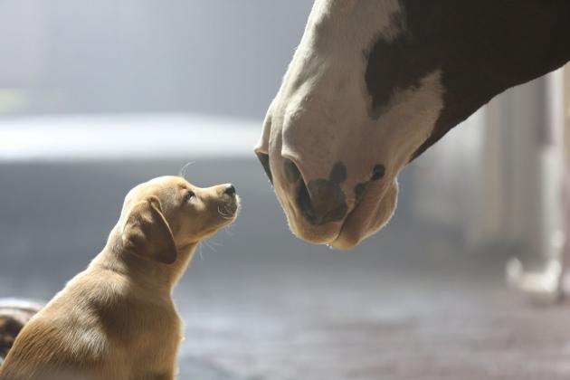 Super Bowl Commercials 2014: Breaking Down Memorable Ads During Big Game