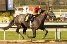 Midnight Hawk Tops Seven-Horse Lewis Field