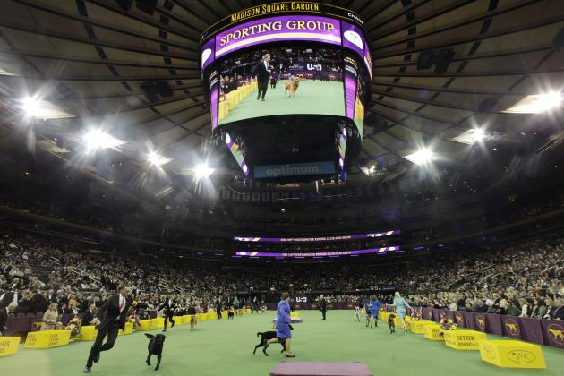 Westminster Dog Show 2014 Results: Best of Breed Winners and Day 2 Recap