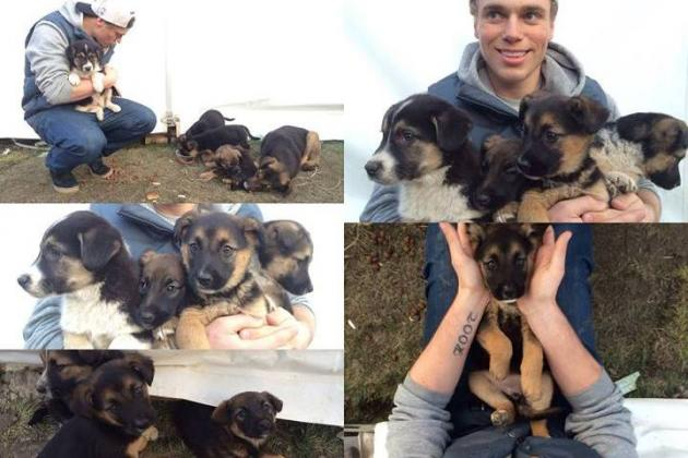 Olympian and Russian Billionaire Doing Their Part to Save Sochi Stray Dogs