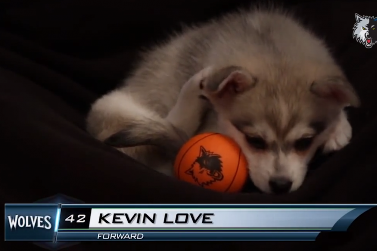 The 'Timberpuppies' of the Minnesota Timberwolves Are Adorable