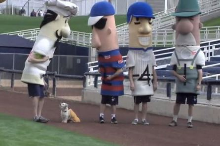 Hank the Ballpark Pup Takes Part in Sausage Race at Brewers Spring Training