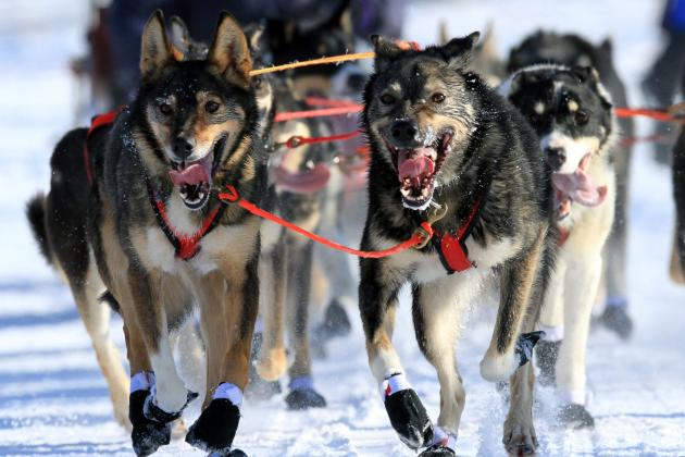 Iditarod Dog Sled Race 2014: Dates, Start Time, Route and Event Info