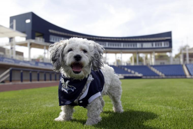 Hank the Ballpark Pup Becomes Official Member of Milwaukee Brewers