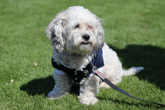 Brewers' Promotion Will Feature a 'Hank the Ballpark Pup' Bobblehead Night
