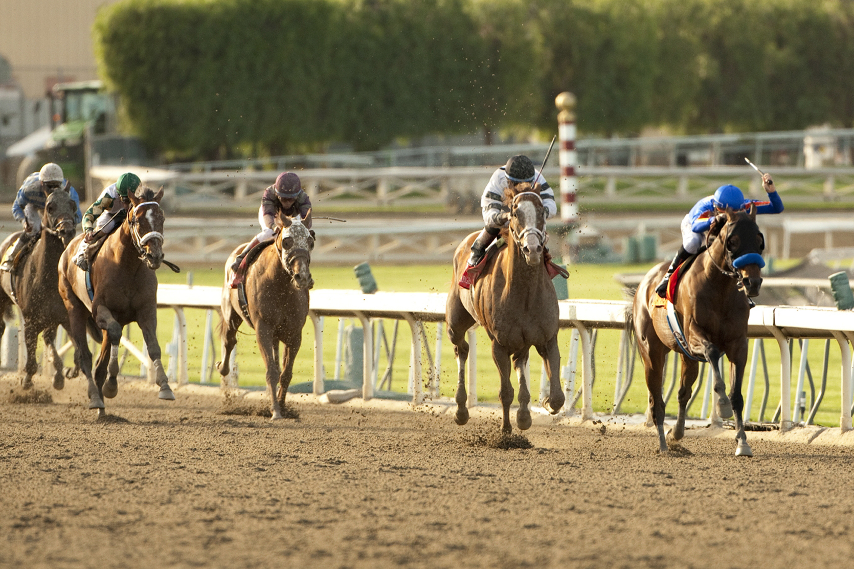 Santa Anita Derby 2014 Results Winner Payouts And Order