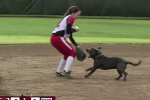 Dog Invades Softball Game, Steals 2 Gloves