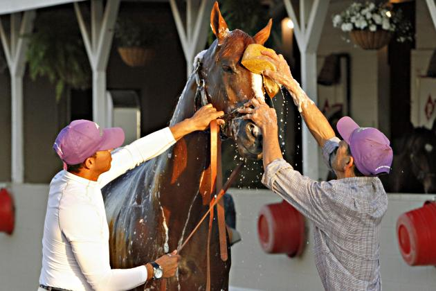 Preakness Odds 2014: Examining Recent Vegas Lines for Entire Field