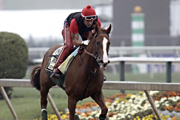 California Chrome's Latest Triple Crown Odds After Preakness Post Positions Draw