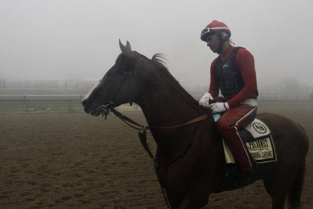 Preakness 2014 Odds: Latest Vegas Lines, Payout Info and Predictions