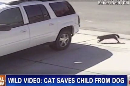 Hero Cat That Fought a Dog to Protect Child Will Toss Out a First Pitch
