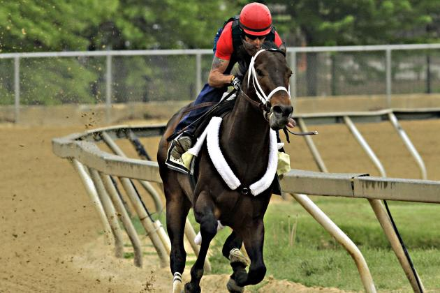 Preakness 2014 Lineup: Final Field Odds and Predictions for All Entries