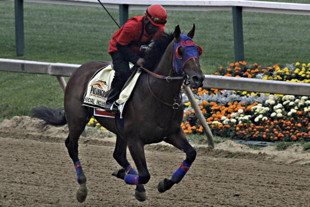 Preakness Odds 2014: Final Predictions on Latest Vegas Betting Lines