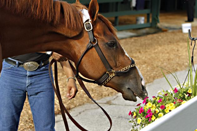 2014 Preakness: TV Coverage, NBC Live Stream and Purse Payout Info