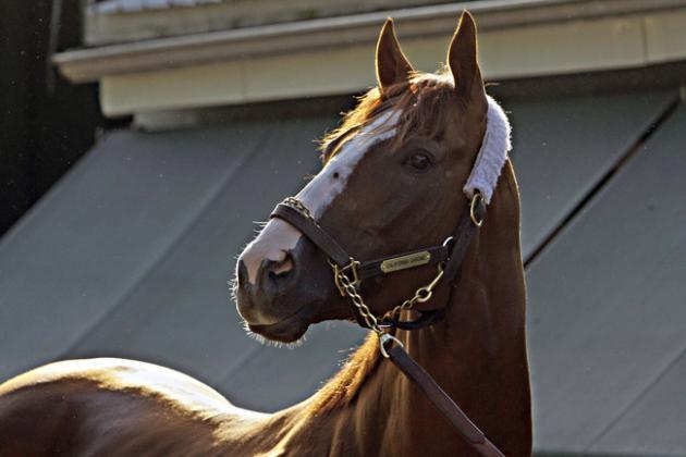 Will Battle of Nasal Strips Derail California Chrome's 2014 Triple Crown Bid?