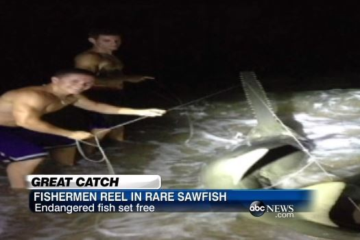 Florida Friends Reel in 11-Foot, 500-Pound Endangered Sawfish