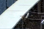Swarm of Bees Invade Dodger Stadium