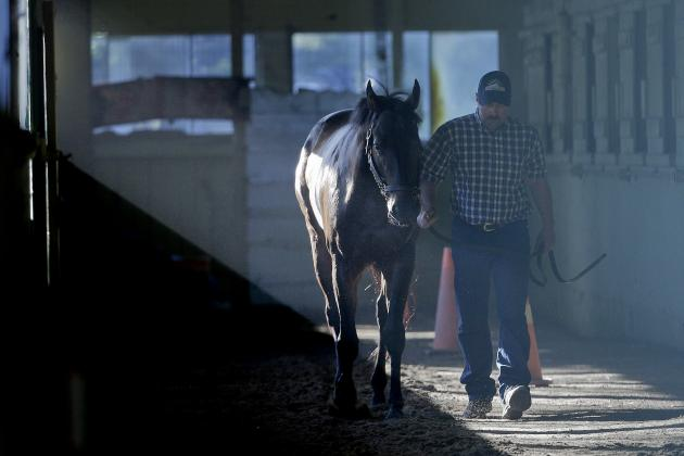 Belmont Stakes Odds 2014: Latest Vegas Betting Lines for Elmont Field