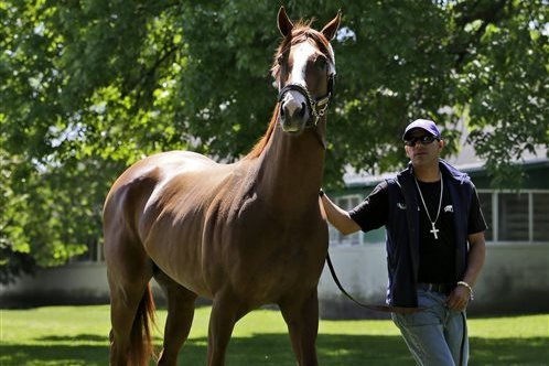 Comparing California Chrome's Triple Crown 2014 Pursuit to Secretariat, Affirmed