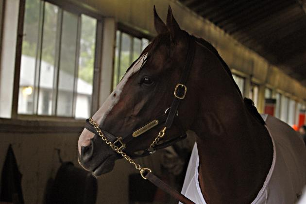 California Chrome's Odds of Joining Triple Crown Royalty Secretariat, Affirmed