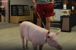 Marcin Gortat Takes His Pet Pig to the Mall