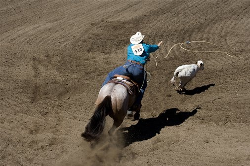 Calgary Stampede 2014: Dates, Events, Schedule and Preview