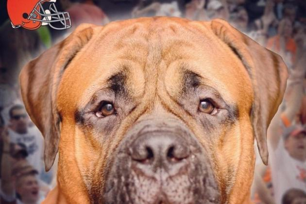 Cleveland Browns to Feature Bullmastiff Named 'Swagger' as New Mascot