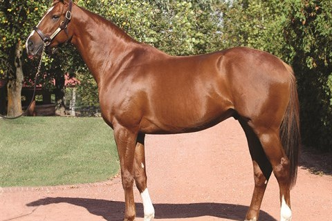Prominent Sire Beau Genius Dies at 29